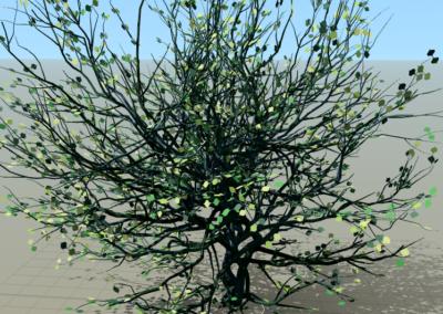 Arbre (Speedtree)